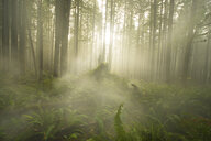 Scenic view of trees and plants growing at North Cascades National Park during foggy weather - CAVF55513