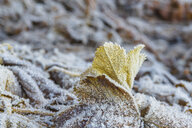 Close-up of frozen leaves on field - CAVF55591