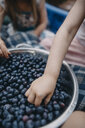 Cropped hands of sisters picking fresh blueberries from colander - CAVF55642