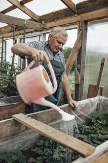 Mature man, gardener in greenhouse watering plants - VPIF01109