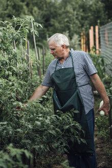 Gardener looking at plants in garden - VPIF01130