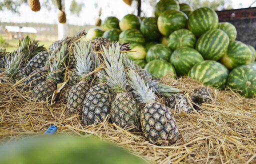 Brazil, pineapples and watermelons on a market - SSCF00006