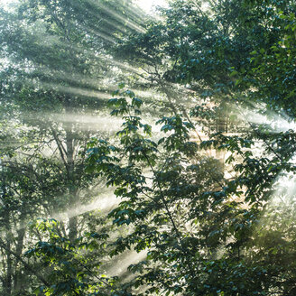 Sunrays streaming through trees at North Cascades National Park - CAVF55900