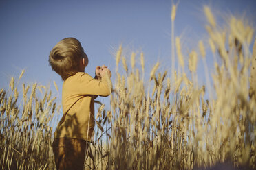 Low angle view of boy looking up while standing amidst wheat field - CAVF55921