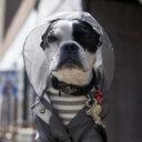 Portrait of dog wearing raincoat - CAVF55981