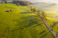 Germany, Bavaria, Upper Bavaria, Dietramszell, Aerial view of alley in the morning light - SIEF08139