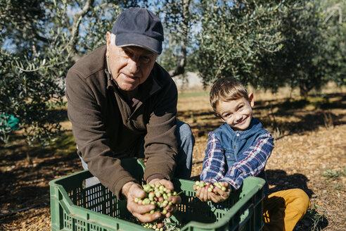 Portrait of senior man and grandson harvesting olives together in orchard - JRFF02135