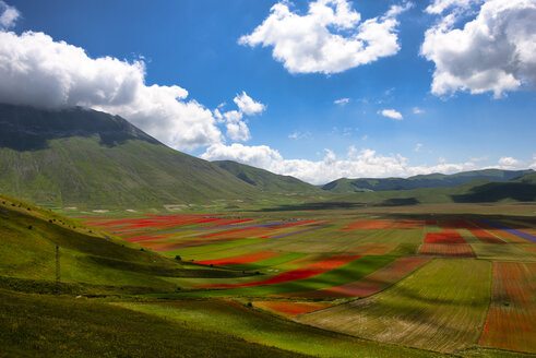 Italy, Umbria, Sibillini National Park, Blooming flowers and lentils on Piano Grande di Castelluccio di Norcia - LOMF00773
