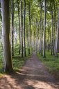 Germany, Mecklenburg-Western Pomerania, Ruegen, Jasmund National Park, Beech forest - MAMF00247