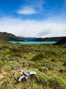 Chile, Patagonia, Torres del Paine National Park, Lago Nordenskjold - AMF06267