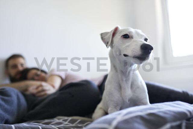 Portrait of white dog lying on bed at home - ZEDF01777 - Zeljko Dangubic/Westend61