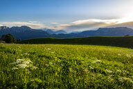 Scenic view of green landscape against sky - CAVF56026