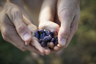 Cropped hands of father and son holding kidney beans at community garden - CAVF56224