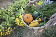 Low section of woman holding vegetables in basket while standing at community garden - CAVF56257