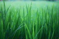 Full frame shot of grass on field. - INGF07801