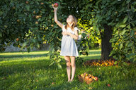 Little girl picking apple from tree - LVF07571