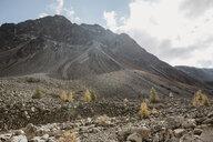Switzerland, Engadine, timberline - LHPF00150