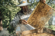 Russland, Beekeeper checking frame with honeybees - VPIF01144