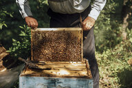 Russland, Beekeeper checking frame with honeybees - VPIF01147