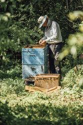 Russland, Beekeeper checking beehive - VPIF01150
