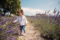 France, Grignan, baby girl exploring lavender blossoms - GEMF02587