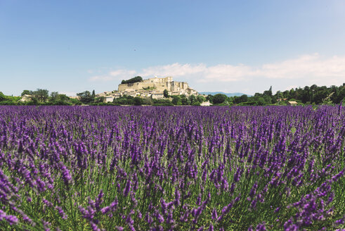 France, Grignan, view to the village with lavender field in the foreground - GEMF02611