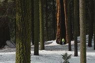 Man standing by tree trunk in forest - CAVF56768