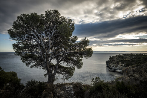 Tree growing on shore by sea against cloudy sky - CAVF56918