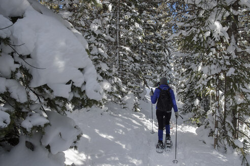 Rear view of woman hiking on snow covered field in forest - CAVF57263