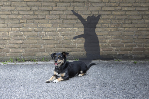 Mongrel lying in front of wall with shadow of a cat - PSTF00268