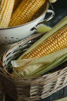 Close-up of corn in containers - CAVF57360