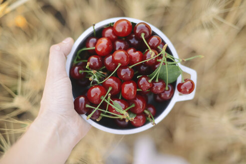 Cropped hand of woman holding fresh cherries in container on field - CAVF57399