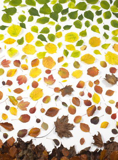 Autumn leaves on white background - ABRF00253