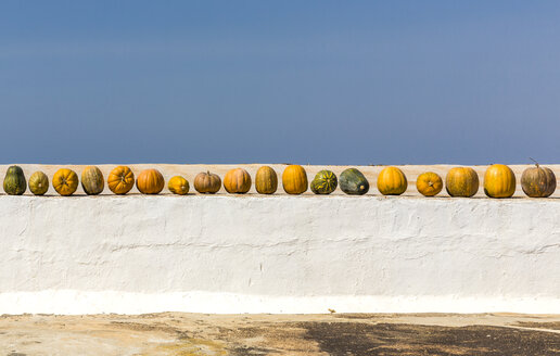 Spain, row of pumpkins - MABF00506