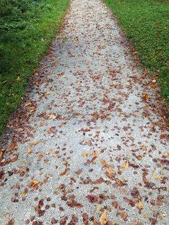 Park way in autumn - WWF04526