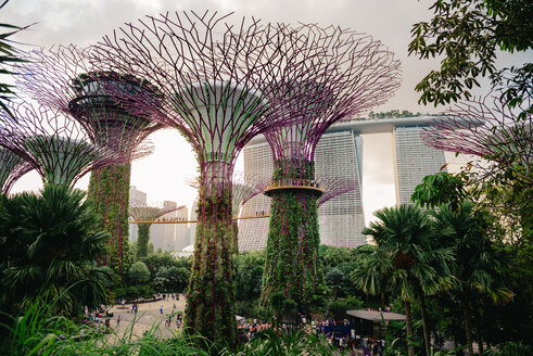 Singapore, Gardens by the Bay, Supertree Grove at sunset - GEM02636