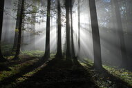 Light and shadow play among the trees in the forest - INGF08312