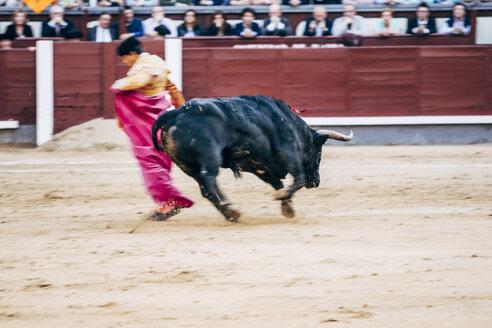 Bullfighting, torero and bull - OCMF00150