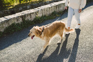Woman walking with her golden retriever dog on a road - RAEF02228