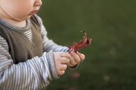 Midsection of baby boy holding leaf while standing on field - CAVF57548