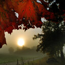 Autumn leaves hang off the trees under a hazy sky during sunset - INGF08474