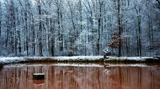 Scenic view of a deserted frozen lake in the forest - INGF08549
