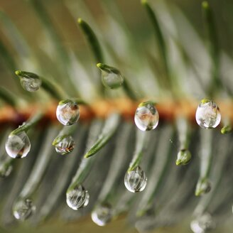 Close-up shot of water drops on a plant - INGF08585