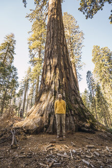USA, California, Yosemite National Park, Mariposa, man standing at sequoia tree - KKAF03044