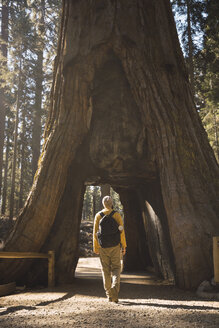 USA, California, Yosemite National Park, Mariposa, man walking through hollow sequoia tree - KKAF03050