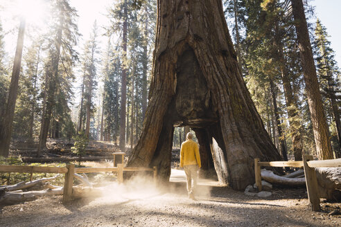 USA, California, Yosemite National Park, Mariposa, man walking through hollow sequoia tree - KKAF03053