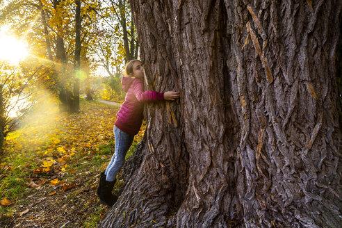 Girl hugging big tree in autumn - SARF04000