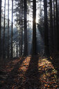 Germany, sunlight in the forest in autumn - JTF01148
