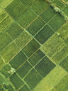 Indonesia, Bali, Keramas, Aerial view of rice fields - KNTF02467