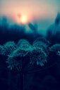 Nature shot of frozen plants during winter - INGF08814
